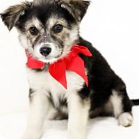 Adopt A Pet :: Carol - Dalton, GA