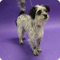 Adopt A Pet :: *OREO* - Salt Lake City, UT