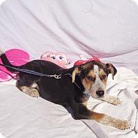 Adopt A Pet :: Falcon - West Chicago, IL