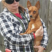 Adopt A Pet :: Sy - Livingston, TX