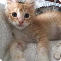 Adopt A Pet :: Reggie - Gainesville, FL