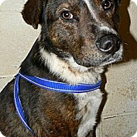 Adopt A Pet :: Haywire - Converse, TX