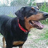 Adopt A Pet :: Hannah - New Richmond, OH
