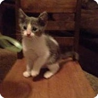Adopt A Pet :: Ducky - Justin, TX
