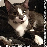 Adopt A Pet :: King George - Vero Beach, FL