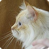 Adopt A Pet :: Sante Fe - Columbus, OH