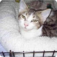 Adopt A Pet :: Shy - St. Louis, MO