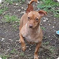 Adopt A Pet :: Tessa - Tumwater, WA