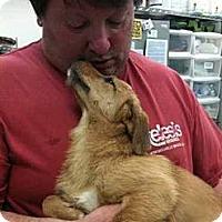 Adopt A Pet :: UNA - Southampton, PA