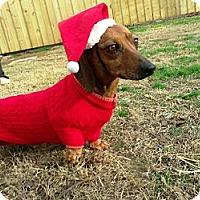 Adopt A Pet :: Paco - Gadsden, AL