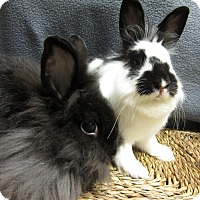 Adopt A Pet :: Keira & Nora - Newport, DE
