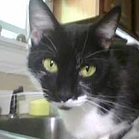 Adopt A Pet :: zz 'Kit Kat' courtesy post - Cincinnati, OH
