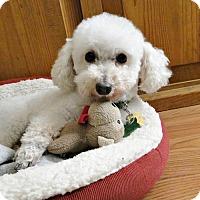 Adopt A Pet :: Tobi - Walnut Creek, CA