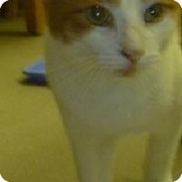 Adopt A Pet :: Chi Chi - Hamburg, NY