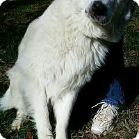 Adopt A Pet :: Precious - Indian Trail, NC