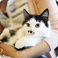 Adopt A Pet :: Lando - Baytown, TX