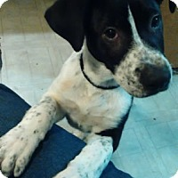 Adopt A Pet :: Ranger - Avon, NY