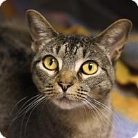 Adopt A Pet :: MOONSHINE - Kyle, TX
