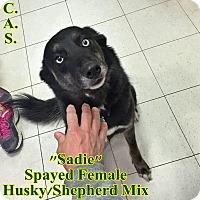 Adopt A Pet :: 1-11 Sadie - Triadelphia, WV