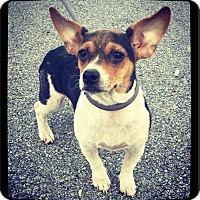 Adopt A Pet :: Chrissy (Judy) - Grand Bay, AL