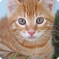 Adopt A Pet :: Simba - Yuba City, CA