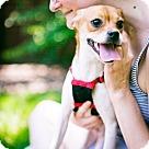 Adopt A Pet :: Krissi (Has application)
