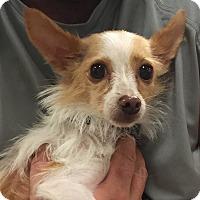 Adopt A Pet :: Pixie - Orlando, FL