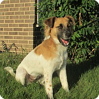Adopt A Pet :: Mandy - New Oxford, PA