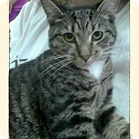 Adopt A Pet :: Onepenny - Trevose, PA