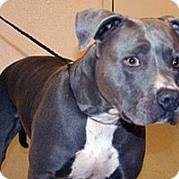 Adopt A Pet :: Sassy - Wildomar, CA