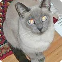 Adopt A Pet :: Zora - Davis, CA