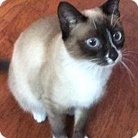 Adopt A Pet :: Laila - San Diego, CA