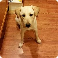 Adopt A Pet :: Boomer - Silverdale, WA