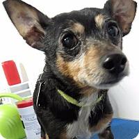 Adopt A Pet :: Chimi  (DJ) - Van Wert, OH