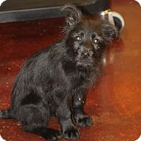 Adopt A Pet :: Pepper-Pending Adoption! - Mahwah, NJ