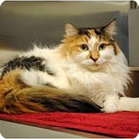 Adopt A Pet :: Mew - Palmdale, CA