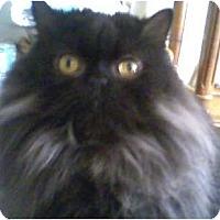 Adopt A Pet :: Magnum PI - Columbus, OH