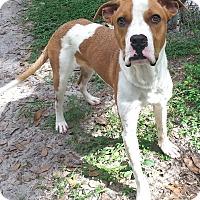 Adopt A Pet :: Rex - Orlando, FL