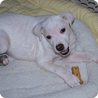 Adopt A Pet :: Andy - Minneola, FL