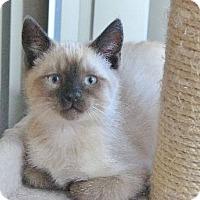 Adopt A Pet :: Spooky - Davis, CA