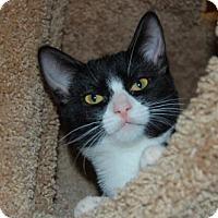 Adopt A Pet :: Sarah - Buena Park, CA
