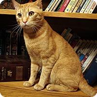 Adopt A Pet :: Jeffery - COURTESY POSTING - Gilbert, AZ