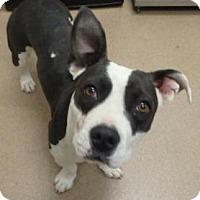 Adopt A Pet :: Lillian #155171 - Apple Valley, CA
