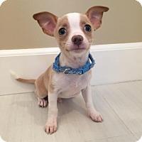 Adopt A Pet :: Mono - Los Angeles, CA