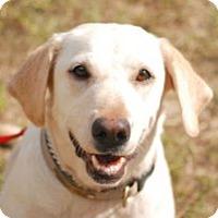 Adopt A Pet :: Sunshine - Minneola, FL