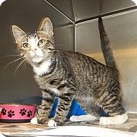 Adopt A Pet :: Dutches - Newport, NC