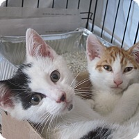Adopt A Pet :: Spunky&Spotty'12 - New York, NY