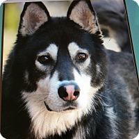 Adopt A Pet :: BERG VON BERNE - Los Angeles, CA