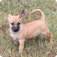 Adopt A Pet :: Timer - Harmony, Glocester, RI