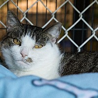Adopt A Pet :: Freckles - Freeport, NY
